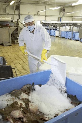 Lopata za led