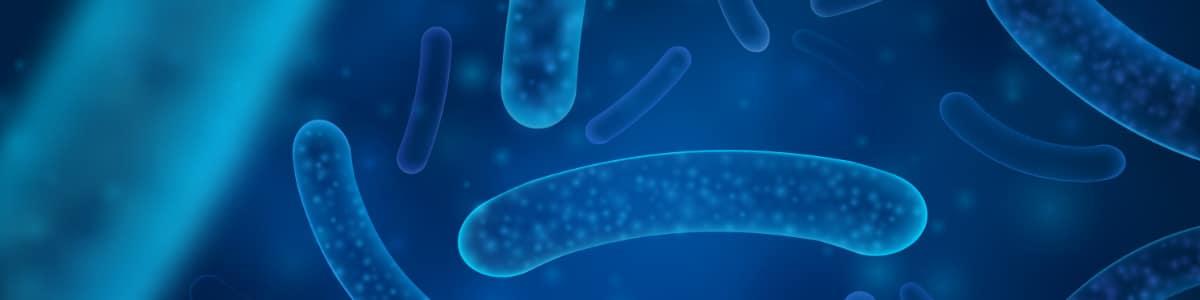 Salmonela u prehrambenoj industriji - 5 koraka za uspješnu kontrolu