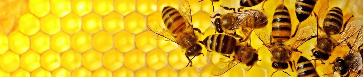 oprema za pčelarstvo